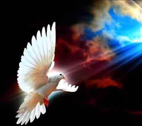 Roh Kudus Mengajar Kita Untuk Berdoa
